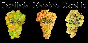 Uvas de Parellada, Macabeo y Xarel·lo para elaborar cava