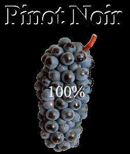 Cava Rosat Vinya Escudé elaborat amb Pinot Noir